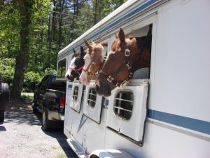 3 Pretty Ponies in the trailer