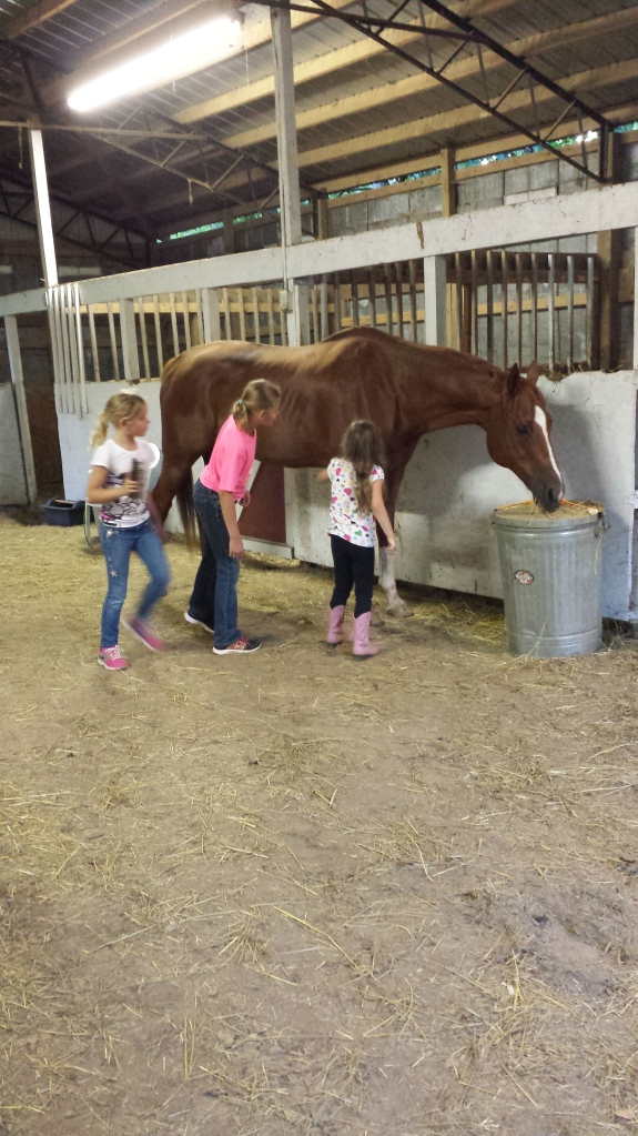 Elle and two of her friends grooming Baron