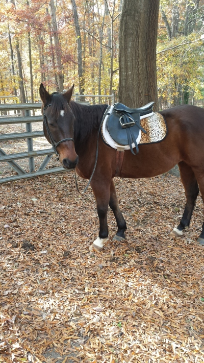 I bought my gelding a leopard saddle pad. He has a pink halter too. The struggle is real.