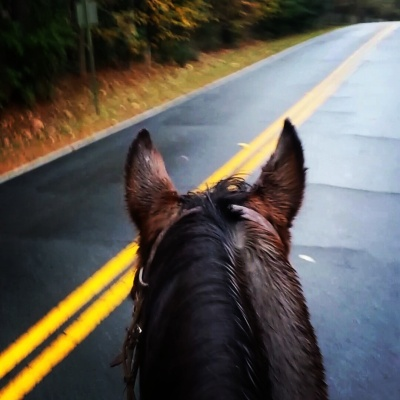 I rode him bareback down a residential road the other day. He's as level headed as they come.